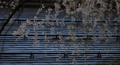 プレイバック 桜 Ⅱ