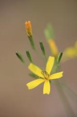 小さい野の花