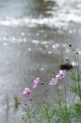いつもの川辺
