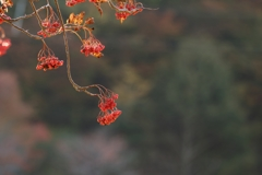 秋も深まり