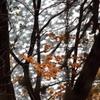 秋風の水面