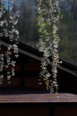 春の喜び Ⅶ