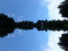 外から見たトトロの森