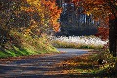落葉の散歩道_025