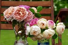 薔薇の椅子