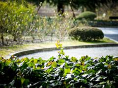 植物園の光景