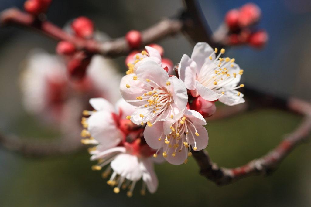 もうすぐ春ですね♪