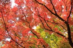 foliage season 2010