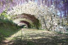 藤棚のトンネル