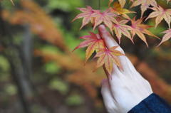 紅葉狩りの手