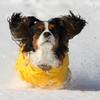 雪の中で走ります♪