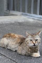 長崎は猫が多い