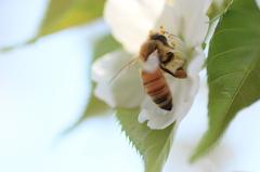 花から花へ受粉のお手伝い