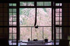 桜 借景 (吉野)