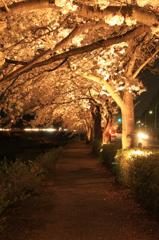 夜桜のアーケード