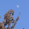 花見と月見