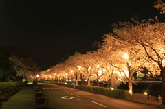 yozakura street