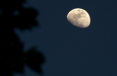moon 貴方は・・・・