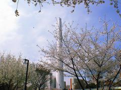 清掃工場の桜