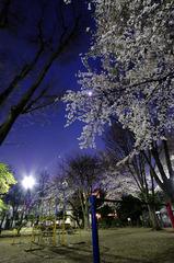 夜桜と月と鉄棒
