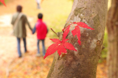 紅葉と親子