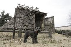 弥生時代の番犬