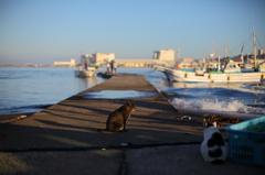 晴れ渡る漁港