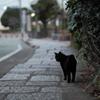 歩道の黒猫