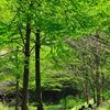 新緑の木陰で・・・