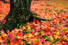七色の絨毯