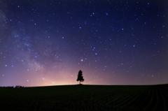 夕張の丘で戯れ