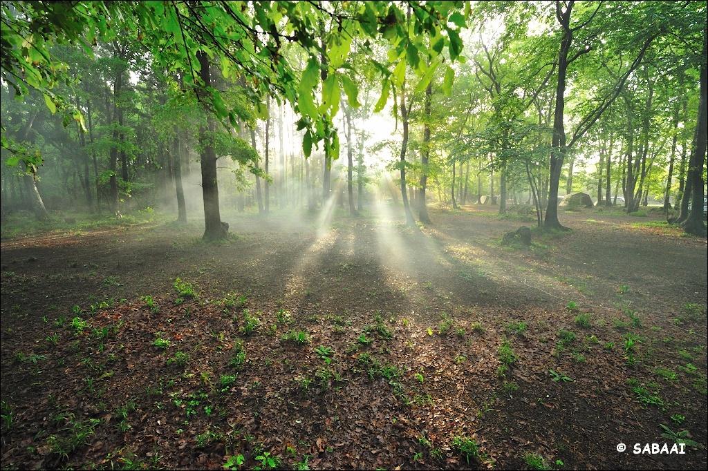 「聖なる森」に朝がキター
