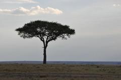 アフリカの大地