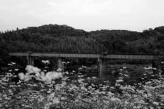 廃止路線 ~目的を失った橋~