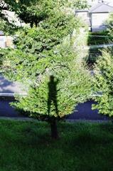 My shadow Ⅰ