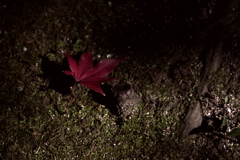 落葉(ラクヨウ)
