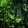 緑濃い木漏れ日の中を行く