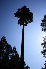 力強く生きる木