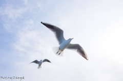 Photogenic_Seagulls 1