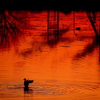 干潟の夕景