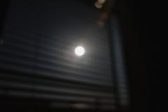 月を見たかい。