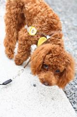 かわいい犬1