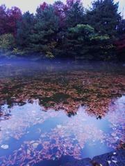 靄がかれり晩秋