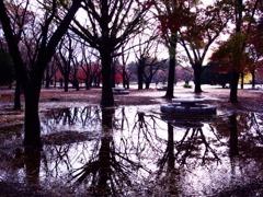 秋雨の水たまり