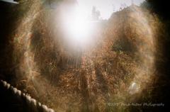 朝日と枯れ草