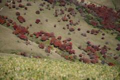 竜ヶ岳(三重)山頂付近06 赤い羊たち