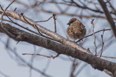 雀の哀愁2
