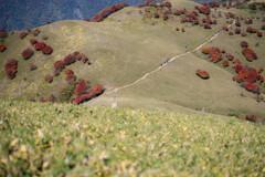 竜ヶ岳(三重)山頂付近07 赤い羊たち