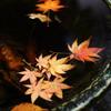 水盤に舞う秋