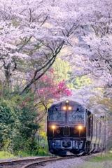 さくら色列車